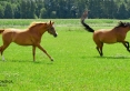 Stadnina Rogale - nauka jazdy konnej