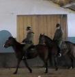 Szkolenie nowo zakupionych koni Straży Grzanicznej
