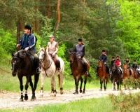 Toruński Klub Jazdy Konnej