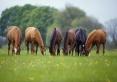 Odchów młodych koni,cena do uzgodnienia