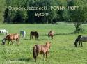 Ośrodek Jeżdżiecki PONNY HOFF Bytom