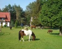 ZABAJKA Ludowy Klub Jeździecki
