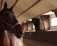 Jeździecki Klub Sprtowy  Hanna