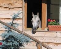 Lecznica i pensjonat dla koni